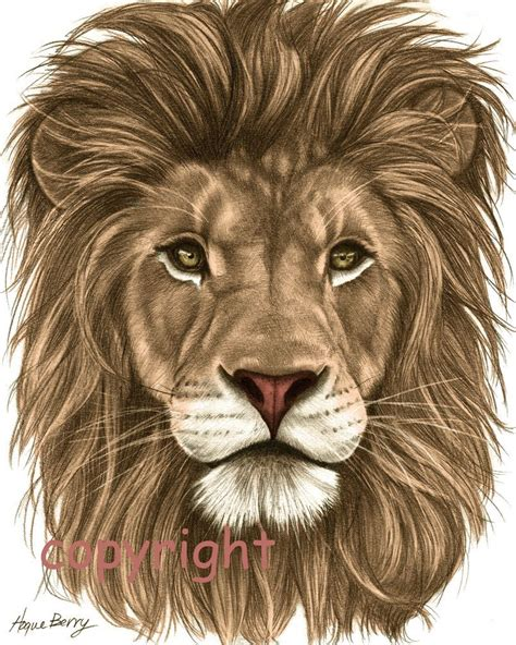 lions colors images for gt colorful drawing senior t shirt ideas
