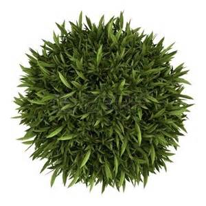 plants top view png png pinterest plants tops and ps