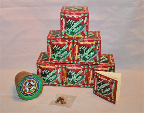 grow your own christmas tree kit has come to tree in a box tree in a box