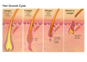 how fast hair grows and other science