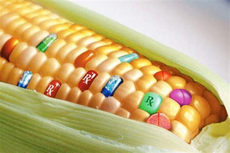 alimentos transgenicos alimentos transg 233 nicos conoce como llegan del laboratorio