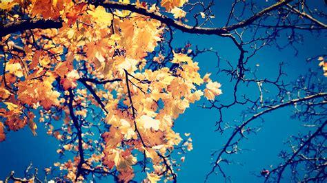 tumblr themes free autumn fall leaves wallpaper free wallpapersafari