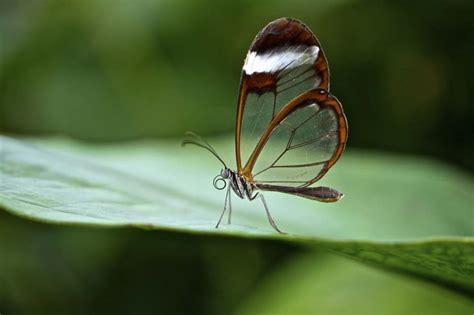 imagenes animales exoticos hermosos 50 animales ex 243 ticos m 225 s hermosos en el planeta tierra