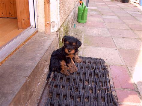 kleine hunde suchen ein neues zuhause hunde tieranzeigen seite 579