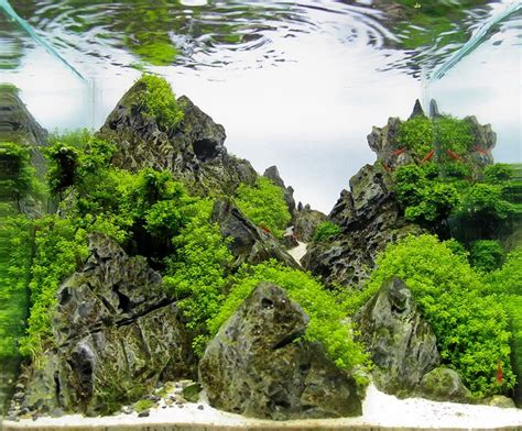 style aquascape 17 best iwagumi aquascaping style tag images on