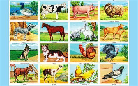 Imagenes De Animales Utiles | animales domesticos utiles para el hombre imagenes