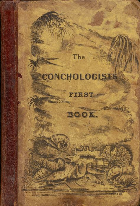 the in the picture book the conchologist s book