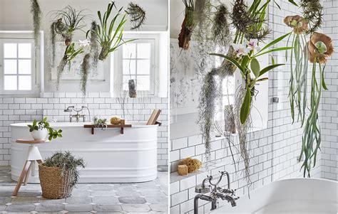 piante da bagno le piante da mettere in bagno tillandsie e orchidee