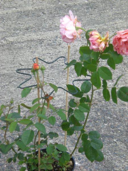 die gartenscheune die gartenscheune pflanzenst 252 tzringe