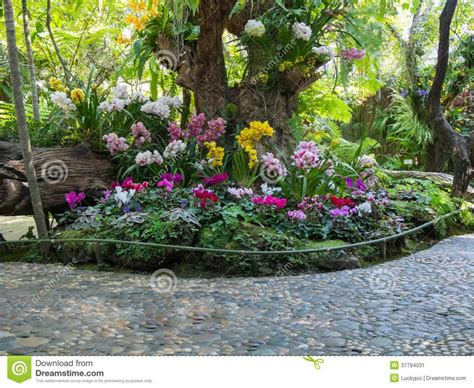 backyard garden florist beautiful flowers garden house inspirations and flower
