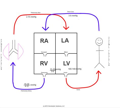 simple diagram of the schematic diagram of fetal circulation wiring diagram