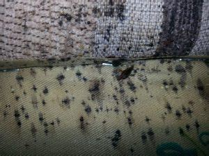 how long can bed bugs live on clothes how to get rid of bed bugs tuck sleep
