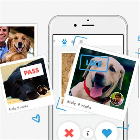 tinder for dogs tinder for is here housekeeping