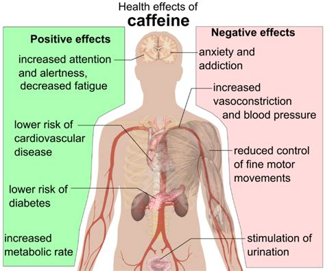 File:Health effects of caffeine.png   Wikipedia