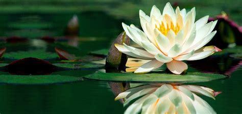 fiore pilates posturalia it centro posturale riequilibrio posturale