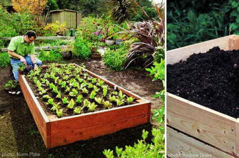 home vegetable gardening ideas photograph