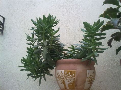 succulents meaning succulents the meaning of top heavy green patches
