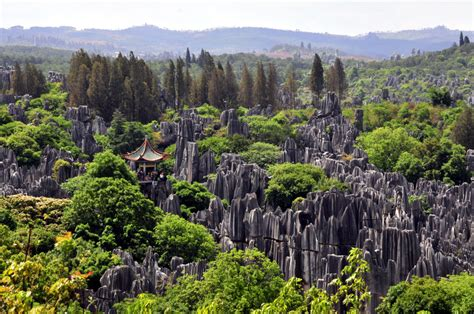 Forest Mba International Trip 2016 by Our Reader Shares Photo Of The Forest In China