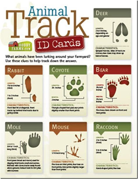 printable animal track cards infographic ish animal track id cards just your average