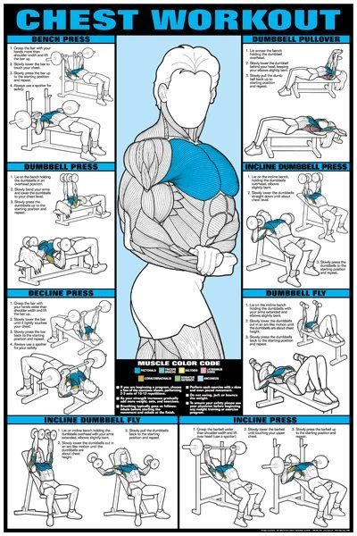 weight bench workouts charts chest exercises for men at gym