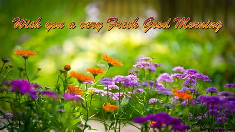 wallpaper flower morning good morning wishes with floral backgrounds