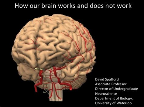 how the brain works and does not work erin legion