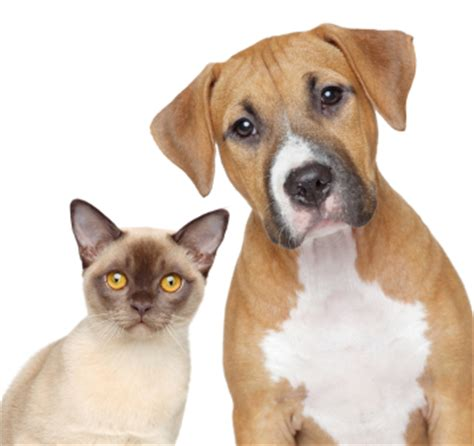 cats or dogs cats and dogs living together