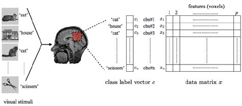 visual pattern classification an illustration of the canonical data matrix of the fmri