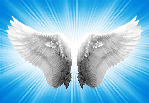 imagenes de alas blancas im 225 genes de alas de 225 ngel