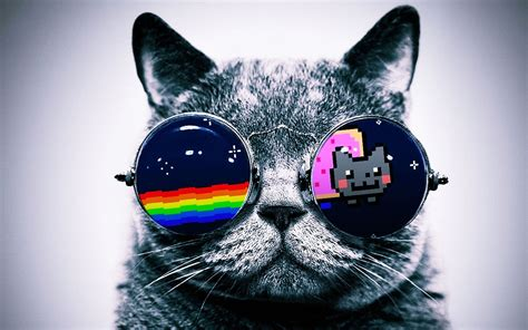 wallpaper cat with sunglasses cat wallpaper