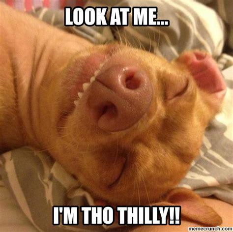 Tuna Meme - tuna the chiweenie meme