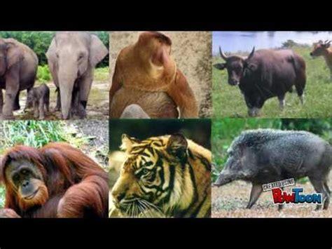 film dokumenter flora dan fauna flora dan fauna indonesia 2 youtube