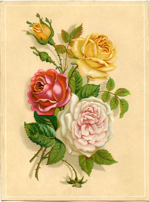 old roses vintage stock images old roses a giveaway the graphics fairy