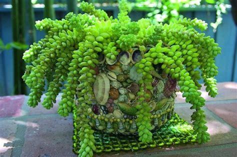 piante da appartamento pendenti arredare il giardino le piante grasse pendenti pollicegreen