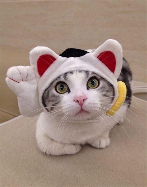 Maneki Neko Fortune Cat Maneki Neko Fortune Cat Hat Suddenly Cat