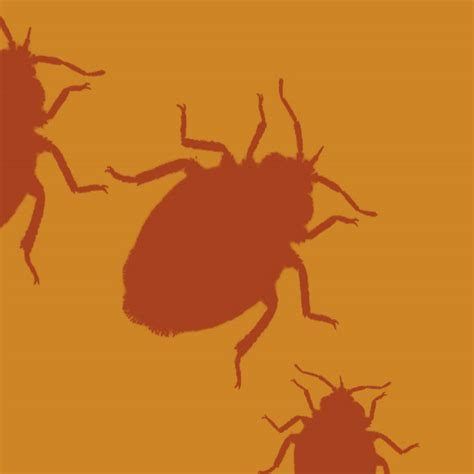 movement on bedbug issue for illinois landlords eviction