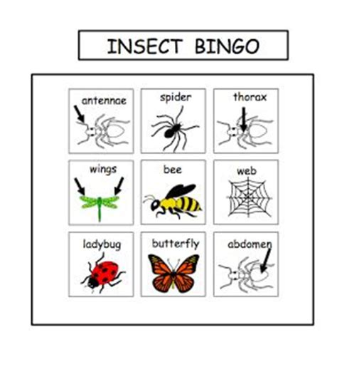 backyard bugs 101 flashcards for discovering insects books insect bingo science social studies