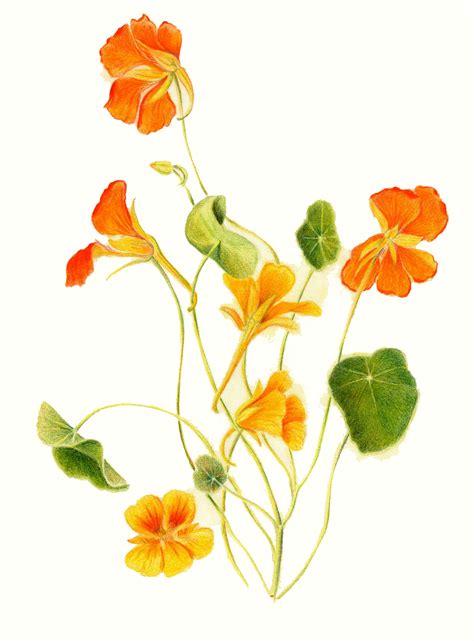 animal tattoo geraldton flowers drawings images
