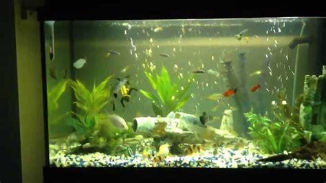 Aquarium L With Fish fish tank 120 l aquarium