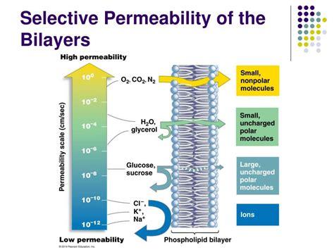 lipids membranes   cells powerpoint