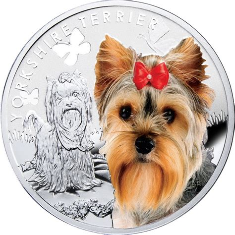yorkie terrier price how much does a yorkie puppy cost terrier price ranges yorkie