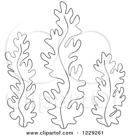 Best Photos Of Printable Seaweed Template Seaweed And Seaweed Coloring Pages