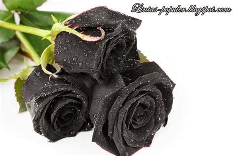 wallpaper mawar hitam hd download gambar wallpaper sedih gudang wallpaper