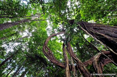 canopy amazon canopy amazon amazon nature tours paragon probably the closest you ll ever get to the amazon