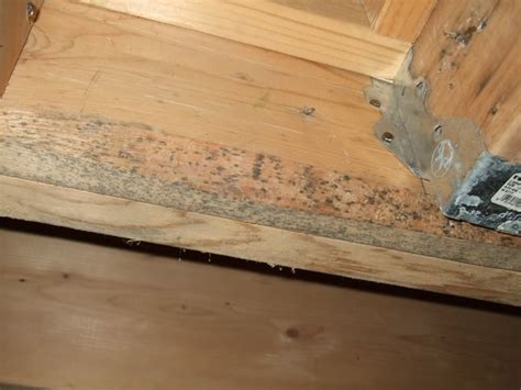 Kitchen Design Maryland What Is Black Mold City Renovations