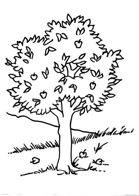 disegni di piante e fiori per i piu piccoli disegni da colorare per bambini di anima