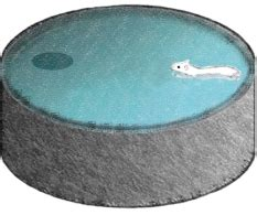 morris water maze water ionizer