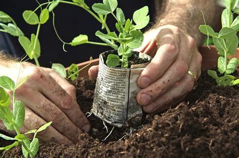 How To Make Paper Pots - paper plant pots gardenersworld