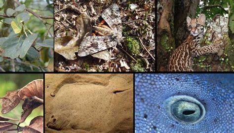 imagenes de animales que se camuflan caras de panteras negras related keywords rostros tristes