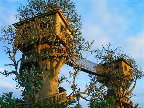 cool trees cool tree house desktop wallpapers